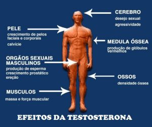 Efeitos da Testosterona no Organismo