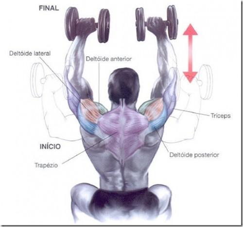 O desenvolvimento Arnold para aumentar o tamanho dos braços
