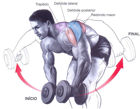 treino para costas movimentos