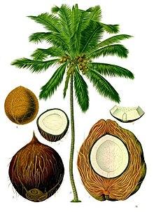 propriedades do coco