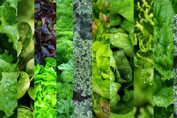 Como preparar folhas verdes e manter os seus nutrientes?