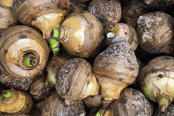 Os 14 benefícios que o taro pode trazer para sua saúde!
