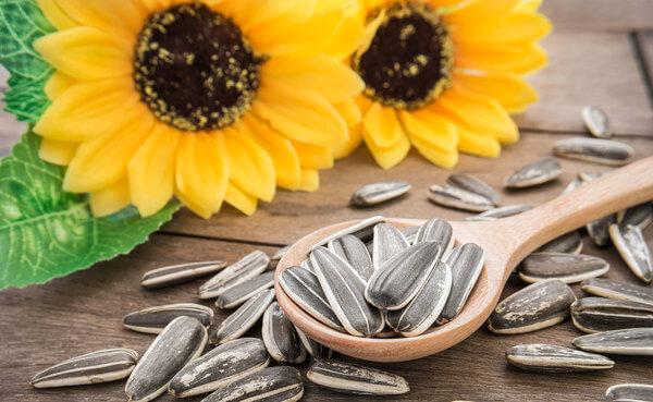 girassol sementes