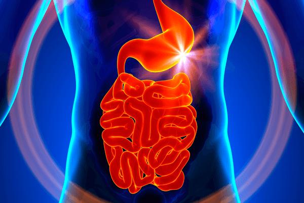 Síndrome do Intestino Irritável: sintomas, cuidados e tratamento