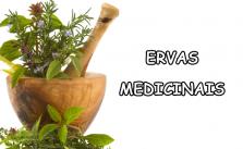Ervas medicinais2